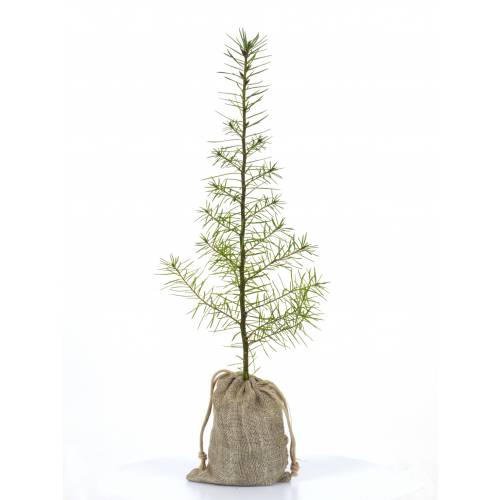 Baby tree for a wedding