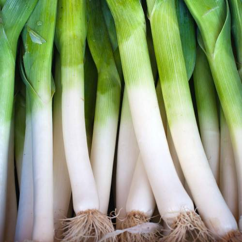 'Gros Long d'Eté' Summer Leek