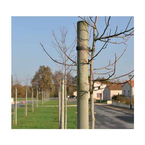 Pine stake  Height 200 cm